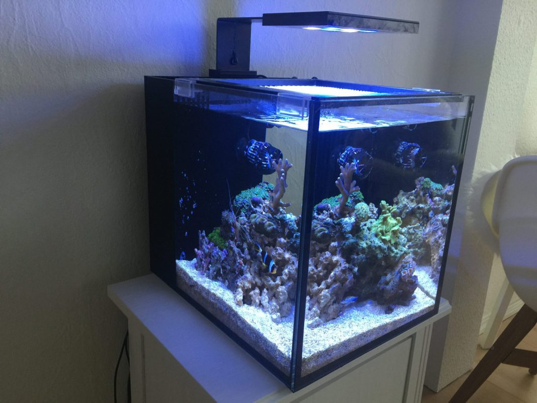 Innovative Marine Fusion 10g