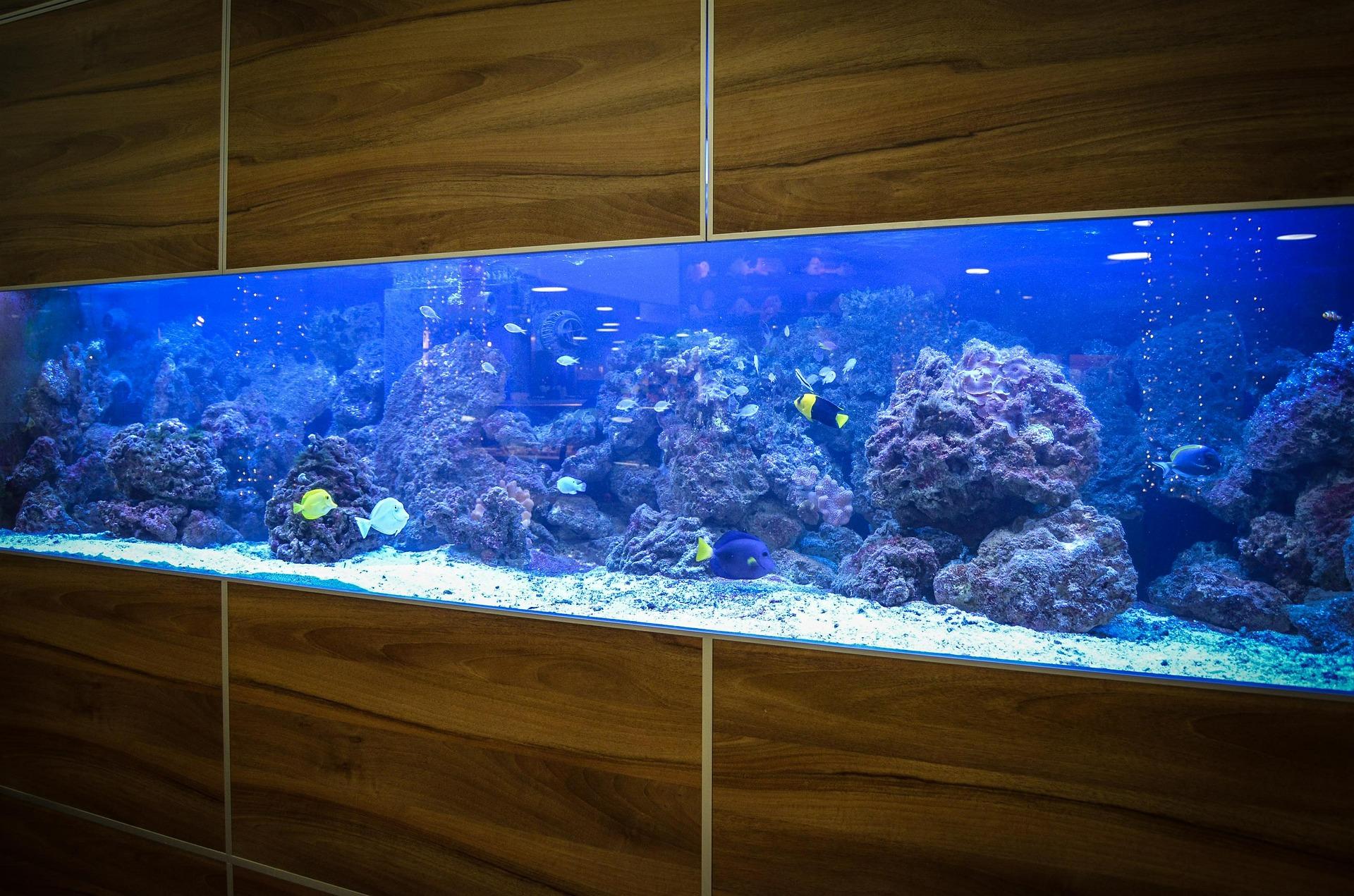 Indbygget akvarie